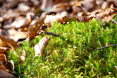moss on fallen leaves in the forest Stock Photo