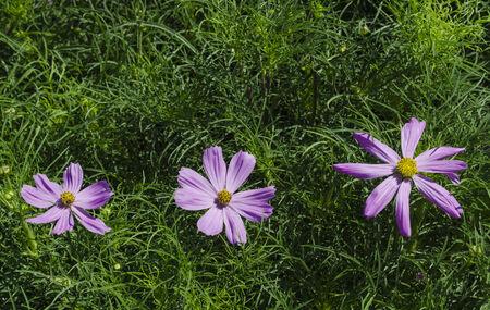 flower garden path: flower
