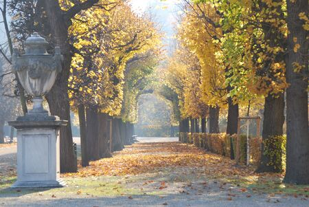 nbrunn: Melancholic alley during autumn