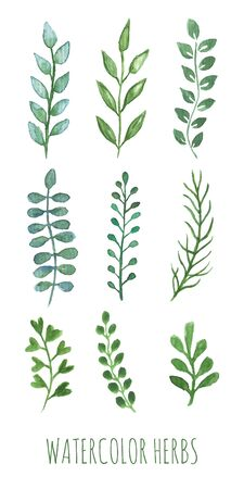 water plants: Hand painted water color herbs. Green plants with leafs set. Isolated floral design elements for laurels, wedding invitation decor, birthday greeting cards. Spring summer botanical style art work.