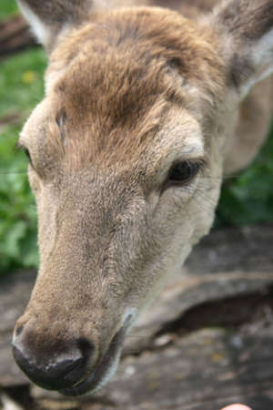 On a photo deer in zoo photo