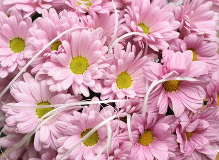 daisie: Sullo sfondo di foto di rosa daisie