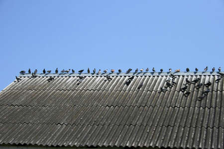 an image of pigeons watching and resting on the roof  photo