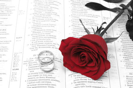 On a photo red rose with golden rings photo