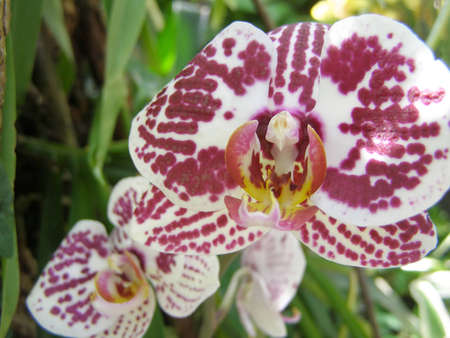 A red orchid is in the botanical garden photo