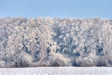 Winter landscape, birch grove Stock Photo - 10782286