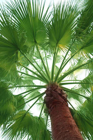 Palm tree. The trunk and branches photo