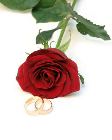 Red rosa with gold rings photo