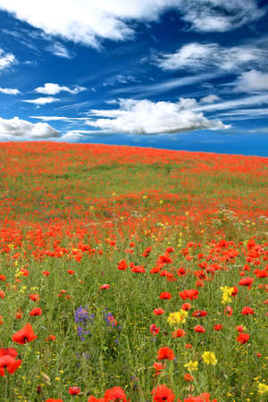 a field of red poppies and daisies Stock Photo