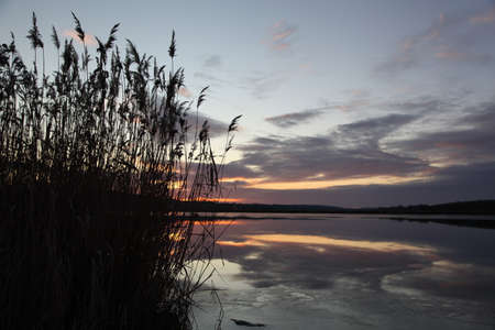 Lake reeds sunset photo