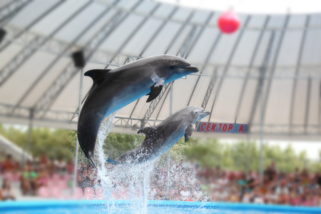 dolphin in the dolphinarium