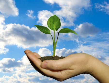 life giving birth: Mano que sostiene una planta fresca