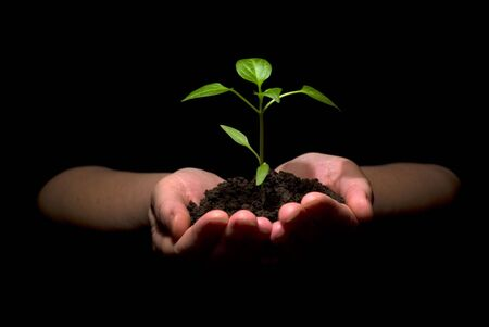 sustain: Hands holding sapling in soil
