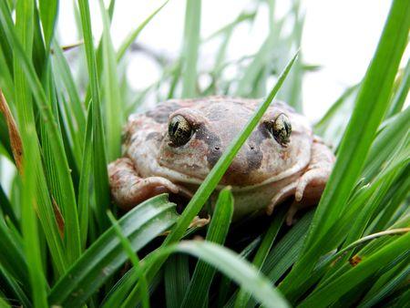 stil: toad                               Stock Photo