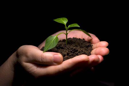 replant: Holding hands alberello nel suolo