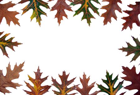 Frame with  maple leaves photo