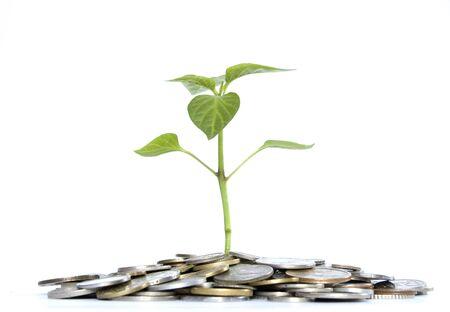 feuille arbre: usine de pi�ces de monnaie