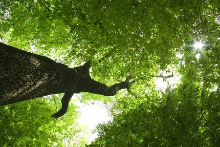 elusive:  forest