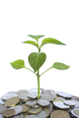 plant in coins  isolated on white background photo