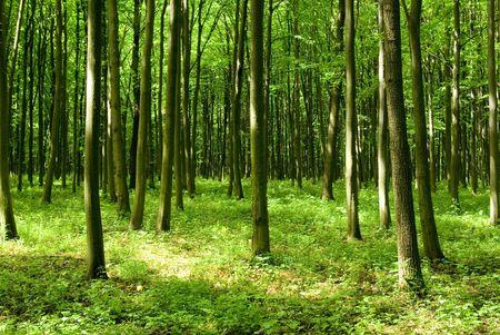 uplifting: forestales