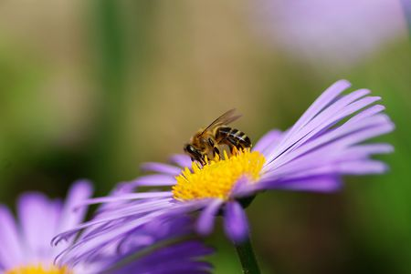violet flower and bee