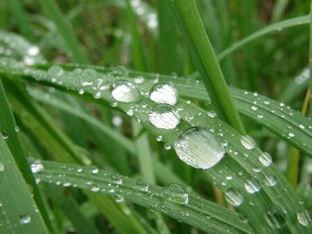Dew drop on a blade of grass                                 photo