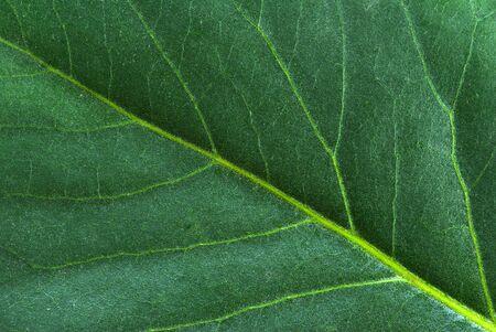 venation: structure of leaf