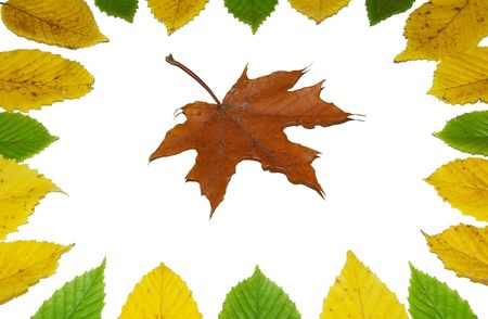 Frame with colored autumn maple leaves photo