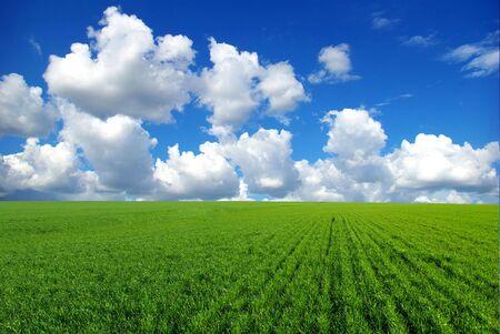 lea: field