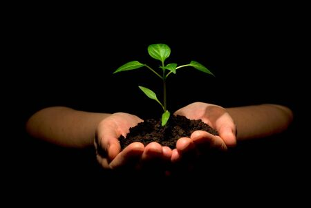 sustain:  plant in hands