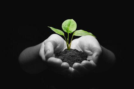 plantando arbol: La celebraci�n de Sapling manos en el suelo