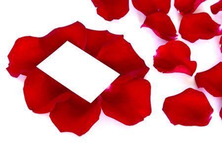 petals rose photo