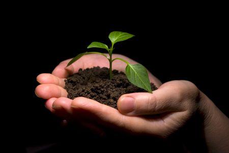 replant: Hands holding sapling