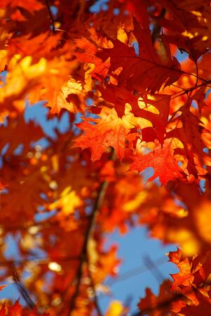autumn leaves background in sunny day photo