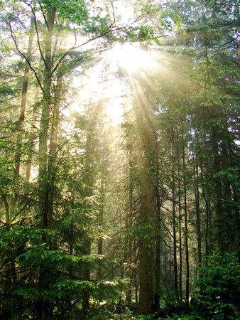 a beautiful explosion of light from the sun deep in the forest.                                photo