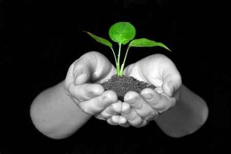 Plant between hands on black photo