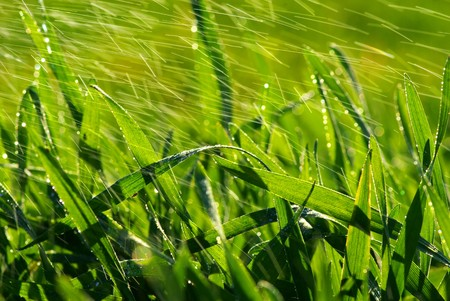drop on a blade of grass  photo