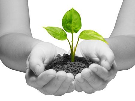 replant: plant