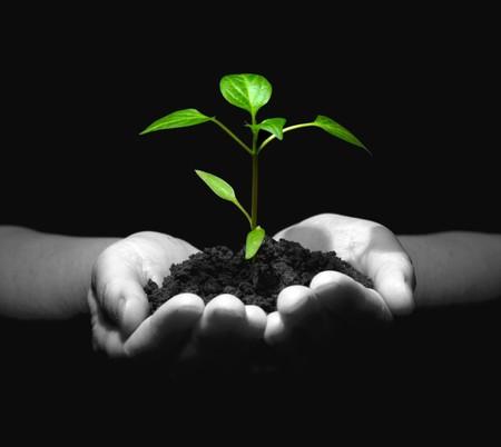 replant:  sapling in soil Stock Photo
