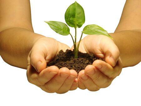 replant: Hands holding alberello nel suolo