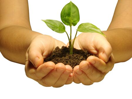 replant: Hands holding sapling in soil                         Stock Photo