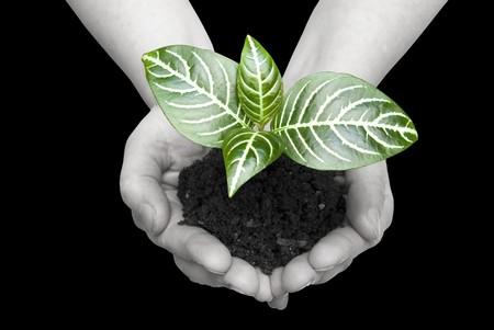 replant:  soil