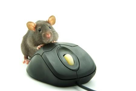 ratty: Rat