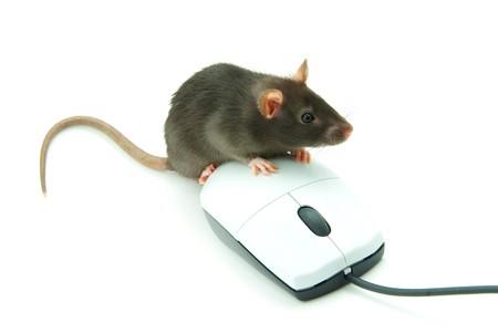 Le rat et une souris d'ordinateur