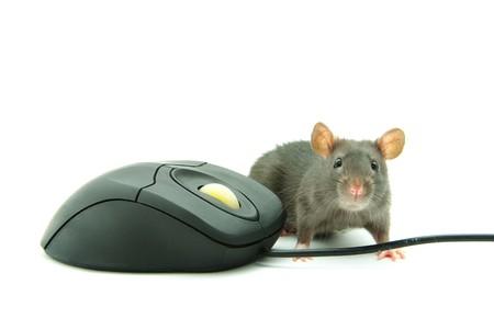 ratty: Ratti e un mouse Archivio Fotografico