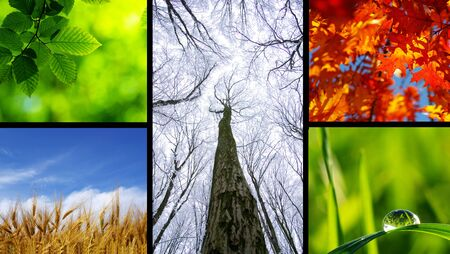Assembling of beautiful seasonal pictures of nature photo