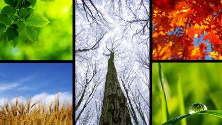 Assembling of beautiful seasonal pictures of nature photo