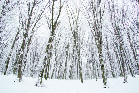 beautiful winter forest  and the road photo