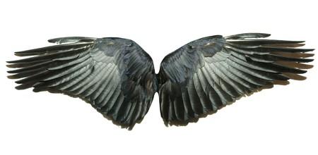 spread wings:  wings
