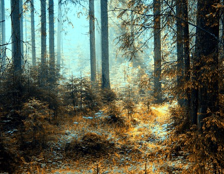 paisajes: una vista como el sol brilla a trav�s del bosque de niebla en un d�a. Foto de archivo